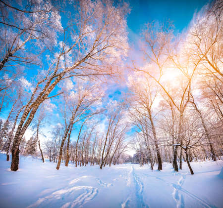 Colorful winter landscape in the city park