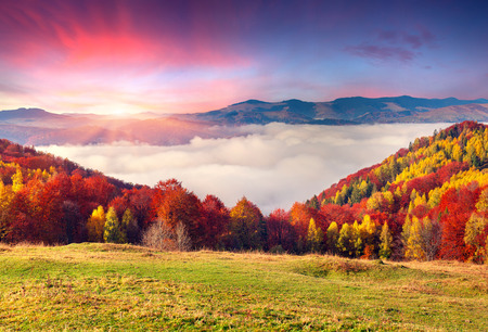 Colorful autumn morning in the Carpathian mountains. Sokilsky ridge, Ukraine, Europe. Zdjęcie Seryjne - 33960013