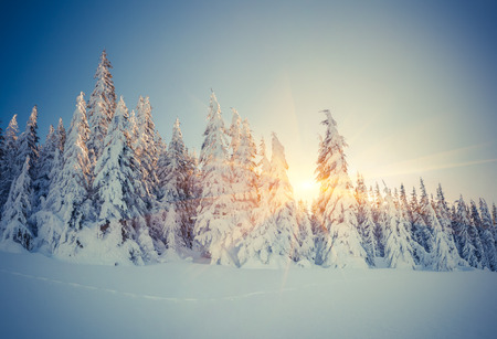 mountain snow: Beautiful winter landscape in the mountain forest. Retro style.
