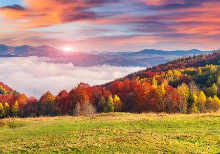Kleurrijke herfst ochtend in de Karpaten. Sokilsky nok, Oekraïne, Europa. Stockfoto
