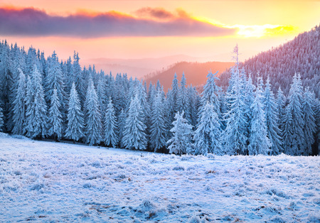 snow and trees: Beautiful winter sunrise in the mountains Stock Photo