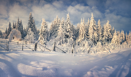 Sunny winter landscape in the mountain forest. Retro style. photo