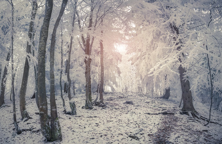 wintery day: Beautiful winter sunrise in the mountain forest. Retro style. Stock Photo