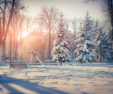 Snow-covered trees in the city park. Winter sunrise. Retro style. Stock Photo