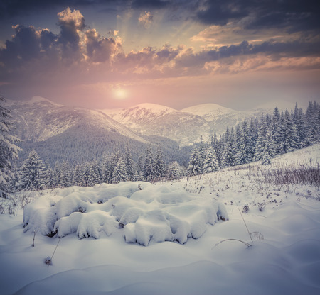 winter trees: Beautiful winter sunrise with snow covered trees in the mountains. Retro style.
