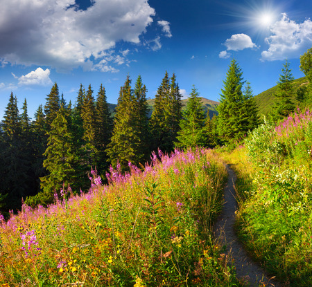 beggar's: Beautiful summer landscape in the mountains with pink flowers.