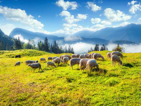 luz natural: Pastos alpinos en la Eslovenia, Alpes Julianos. Parque Nacional de Triglav. Foto de archivo