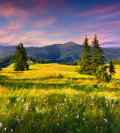 serene landscape: Colorful summer sunrise in the mountains with a feather grass Stock Photo