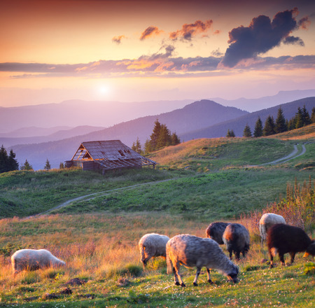 Colorful summer sunset in the carpathian mountains photo