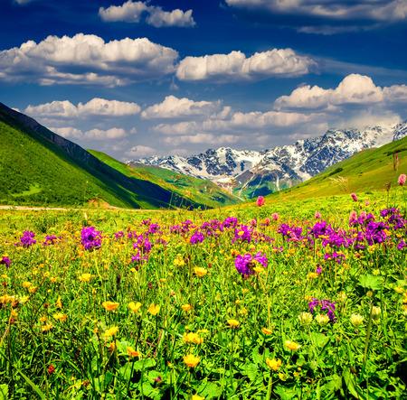 mountain meadow: Beautiful view of alpine meadows in the Caucasus mountains. Upper Svaneti, Georgia.
