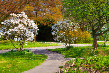 outdoor scenery: Sunny spring morning in the botanical garden of Essen town. Beautiful outdoor scenery in German, Europe. Stock Photo