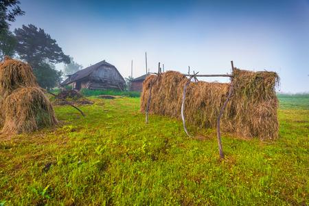 haymaking: Haymaking in a Carpathian village. Ukraine, Europe