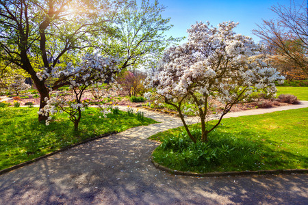 outdoor scenery: Colorful spring sunrise in the botanical garden of Essen town. Beautiful outdoor scenery in German, Europe.