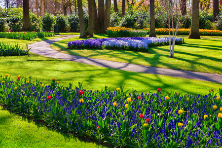 marvellous: Marvellous flowers in the Keukenhof park. Beautiful outdoor scenery in Netherlands, Europe.