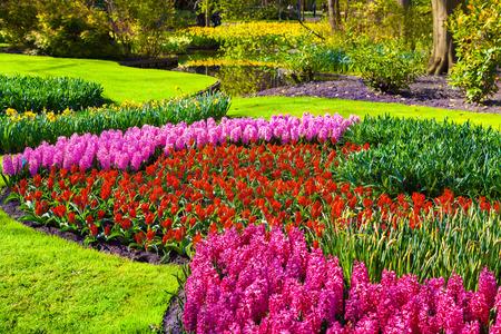 Marvellous flowers in the Keukenhof park. Beautiful outdoor scenery in Netherlands, Europe. photo
