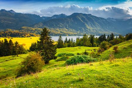 mountain meadow: Colorful summer morning on the Bohinj lake in Triglav national park Slovenia, Julian Alps, Europe.