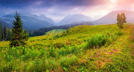 Colorful summer panorama in the italian Alps, Vigo Di Cadore, Italy, Europe. photo