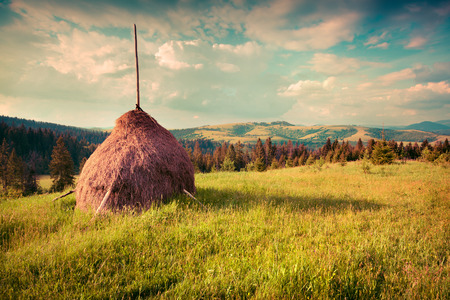 haymaking: Haymaking in a Carpathian village. Ukraine, Europe. Retro style.