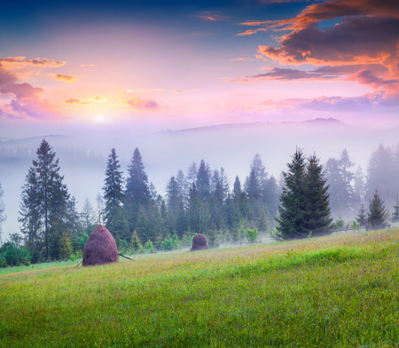 haymaking: Haymaking in a foggy Carpathian village. Colorful summer sunrise in the foggy mountain. Stock Photo