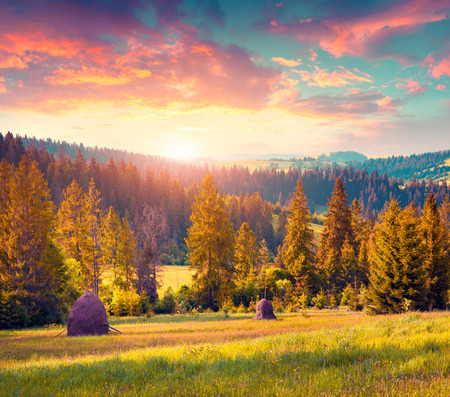 haymaking: Haymaking in a Carpathian village. Colorful summer sunrise in the foggy mountain. Instagram toning.