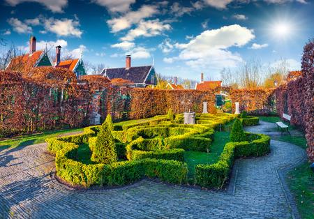zaandam: Artistic green-yellow garden with small bushes. Typical Dutch village Zaanstad in spring sunny day. Netherlands, Europe.