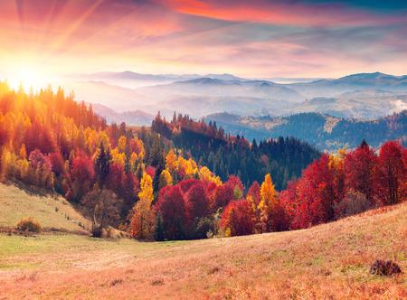majestic: Colorful autumn sunrise in the Carpathian mountains. Sokilsky ridge, Ukraine, Europe.