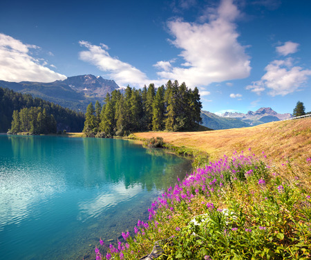 Colorful summer morning on the Champferersee lake. Silvaplana village in the morning mist. Alps, Switzerland, Europe.