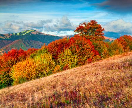 autumn colour: Colorfull autumn morning in the Carpathian mountains. Krasna ridge, Ukraine, Europe. Inastagram toning. Stock Photo