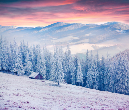 forest background: Colorful winter sunrise in the Carpathian mountains. Kostricha ridge, Ukraine, Europe.