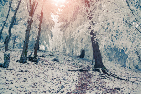 forest background: Colorful winter sunrise in the mountain forest. Retro style.