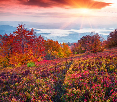 autumn colour: Fantastic colors autumn landscape in the Carpathian mountains. Borzhava ridge, Ukraine, Europe. Inastagram toning.