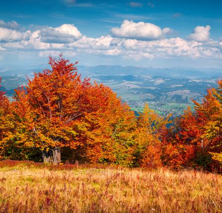 the great outdoors: Colorfull autumn morning in the Carpathian mountains. Borzhava ridge, Ukraine, Europe. Inastagram toning.
