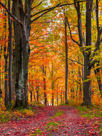 Colorful autumn morning in the mountain forest.