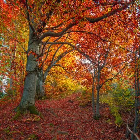 Donkere weg in het bos herfst bergen. Retro stijl.