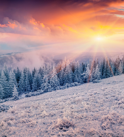winter sunrise: Colorful winter sunrise in the mountain forest Stock Photo