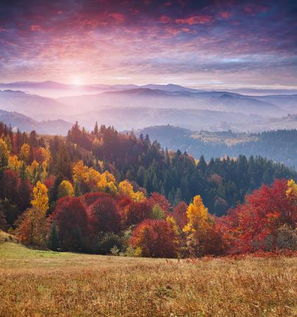 fall trees: Colorful autumn sunrise in the Carpathian mountains. Sokilsky ridge, Ukraine, Europe.