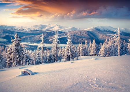 Colorful winter sunrise in the Carpathian mountains. Svydovets ridge, Ukraine, Europe.