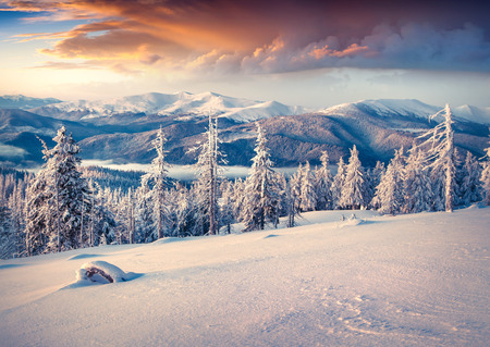 Colorful winter sunrise in the Carpathian mountains. Svydovets ridge, Ukraine, Europe.