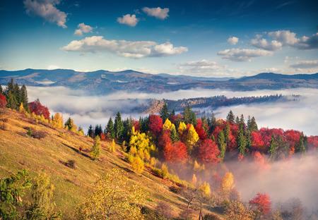 カルパティア山脈でカラフルな秋の朝。Sokilsky リッジ、ウクライナ、ヨーロッパ。