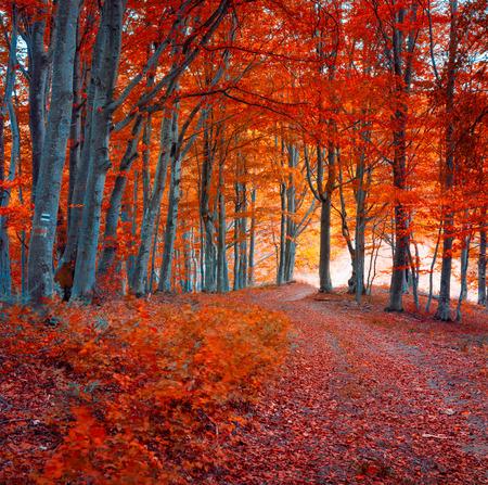 Bunte Herbstmorgen im dunklen Bergwald. Infrarot-Tönung.