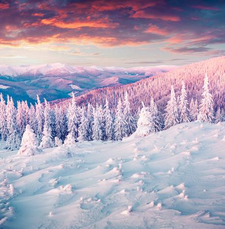 Colorful winter sunrise in the Carpathian mountains. Gorgany ridge, Ukraine, Europe. Instagram toning.