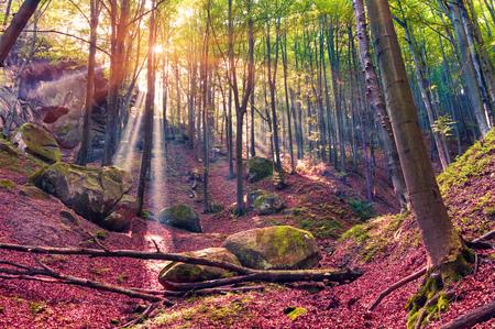 Autumn morning in mystical woods. 免版税图像