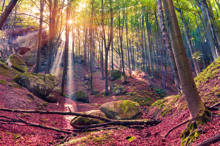 peaceful: Autumn morning in mystical woods. Instagram toning.