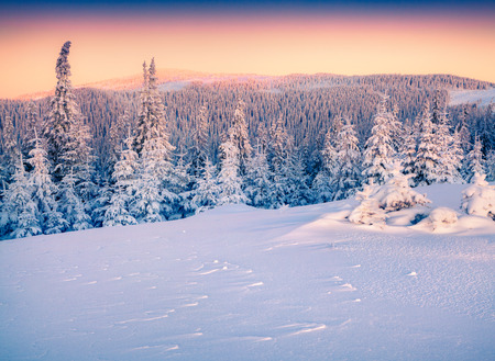 majestic: Colorful winter sunrise in the Carpathian mountains.
