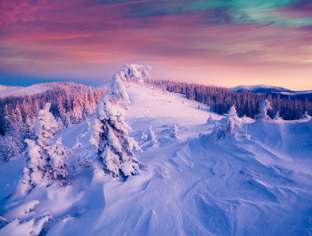 majestic: Colorful winter sunrise in the Carpathian mountains. Gorgany ridge, Ukraine, Europe.    Stock Photo
