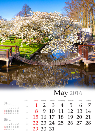 may: Calendar 2016. May. Colorful spring landscape in the city park with blossom sakura tree.