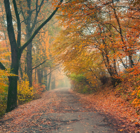 nature backgrounds: Foggy autumn morning in the city park Stock Photo