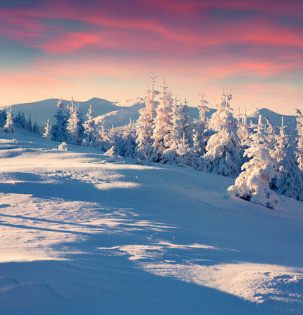 snow tree: Colorful winter sunrise in the mountains.