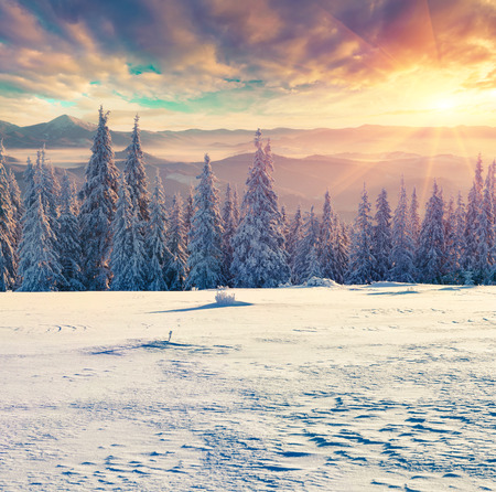 Foggy winter sunrise in the Carpathian mountains. Colorful morning scene in retro style.