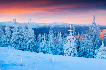 amazing stunning: Colorful winter scene in the Carpathian mountains.